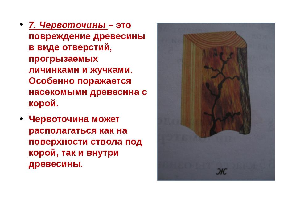7. Червоточины – это повреждение древесины в виде отверстий, прогрызаемых лич...