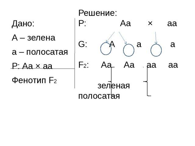 Решение: P: Аа × аа G: А а а F2: Аа Аа аа аа зеленая полосатая Дано: А – зеле...