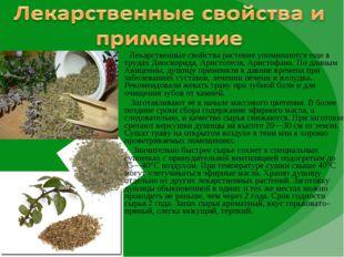 Лекарственные свойства растения упоминаются еще в трудах Диоскорида, Аристот