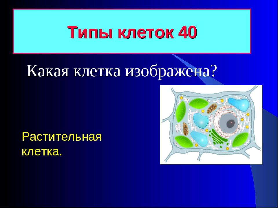 Типы клеток 40 Растительная клетка. Какая клетка изображена?