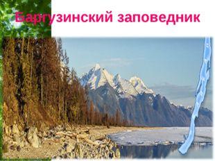 Баргузинский заповедник Free Powerpoint Templates Page *