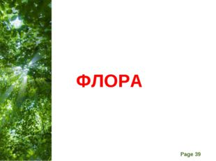 ФЛОРА Free Powerpoint Templates Page *