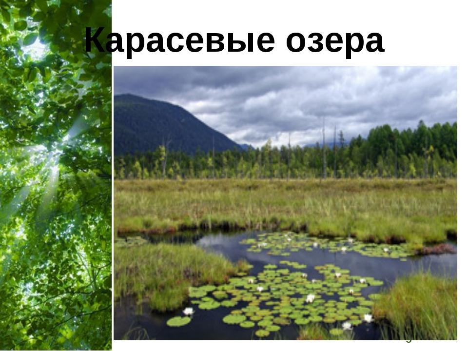 Карасевые озера Free Powerpoint Templates Page *