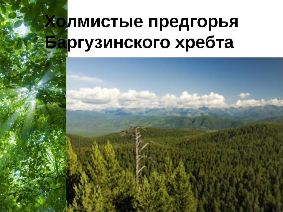 Холмистые предгорья Баргузинского хребта Free Powerpoint Templates Page *