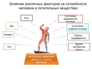 Влияние различных факторов на потребности человека в питательных веществах По