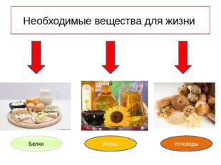 Необходимые вещества для жизни Белки Жиры Углеводы