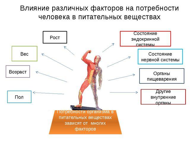 Влияние различных факторов на потребности человека в питательных веществах По...