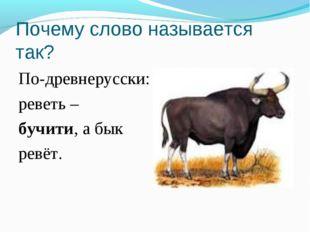 Почему слово называется так? По-древнерусски: реветь – бучити, а бык ревёт.