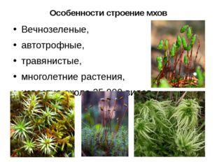 Особенности строение мхов Вечнозеленые, автотрофные, травянистые, многолетние