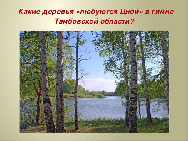 Какие деревья «любуются Цной» в гимне Тамбовской области? а) Берёзы б) Сосны...