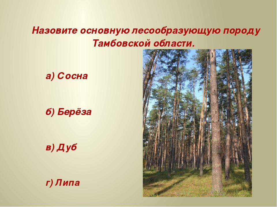 Назовите основную лесообразующую породу Тамбовской области. а) Сосна б) Берё...