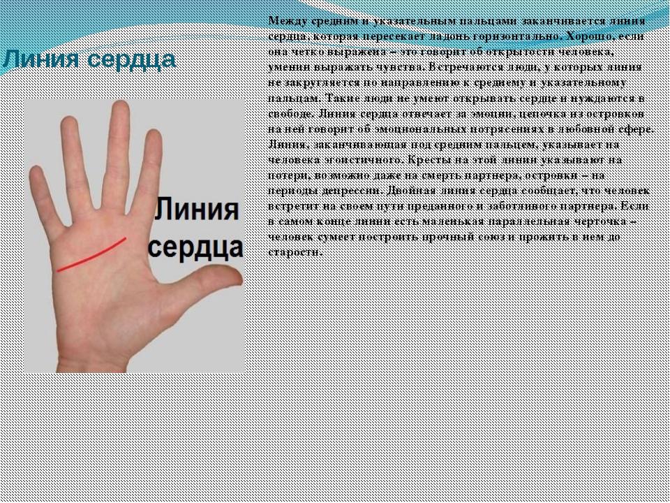 Линия сердца Между средним и указательным пальцами заканчивается линия сердца...