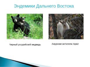 Эндемики Дальнего Востока Черный уссурийский медведь Амурская антилопа горал