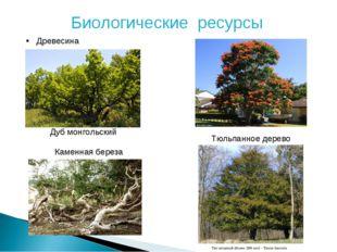 Биологические ресурсы Древесина Дуб монгольский Тюльпанное дерево Каменная бе