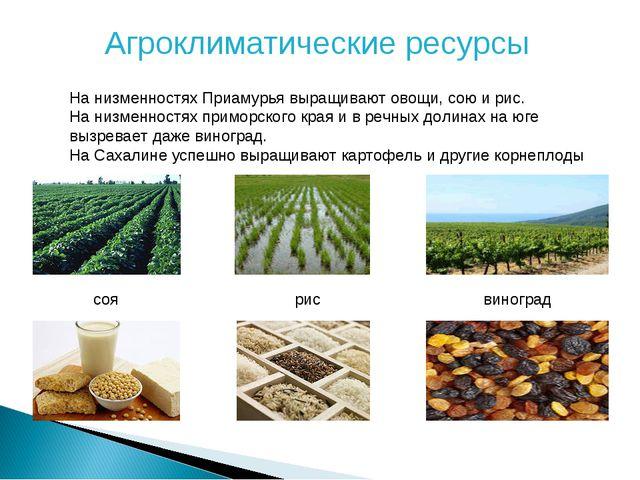 Агроклиматические ресурсы На низменностях Приамурья выращивают овощи, сою и р...