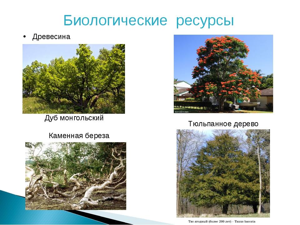 Биологические ресурсы Древесина Дуб монгольский Тюльпанное дерево Каменная бе...