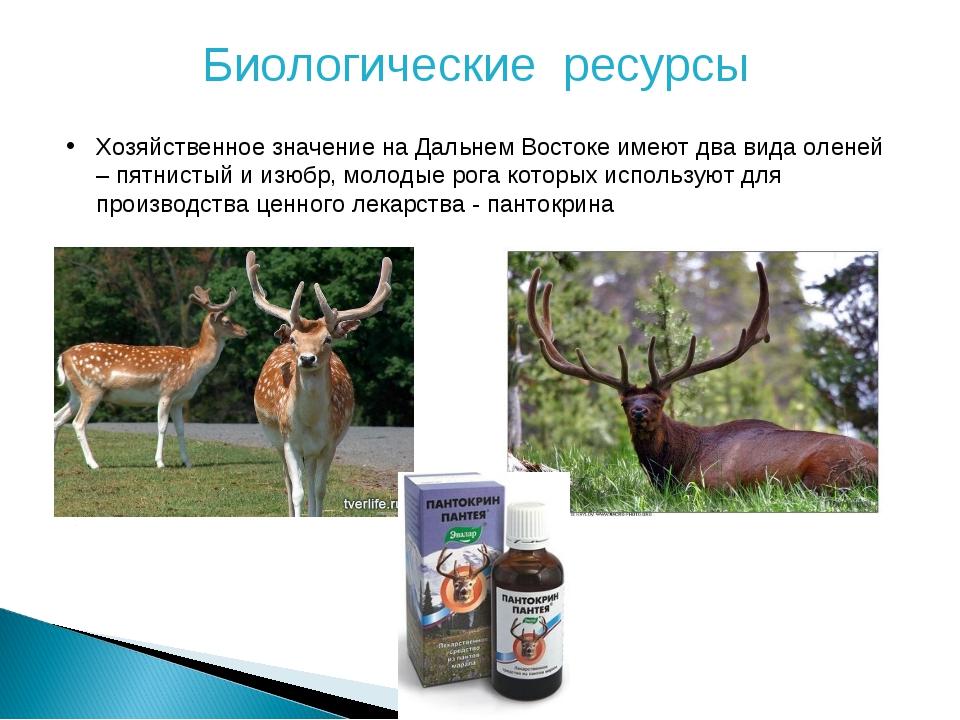 Биологические ресурсы Хозяйственное значение на Дальнем Востоке имеют два вид...