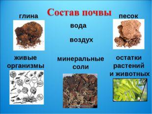 глина песок живые организмы остатки растений и животных вода воздух минеральн