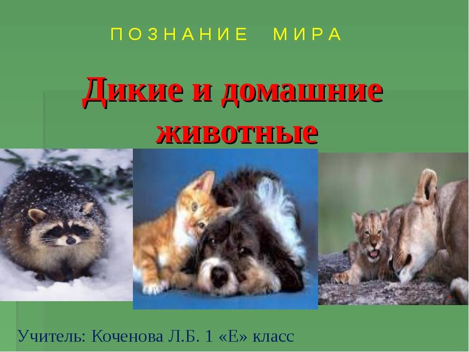 Дикие и домашние животные . Учитель: Коченова Л.Б. 1 «Е» класс П О З Н А Н И...