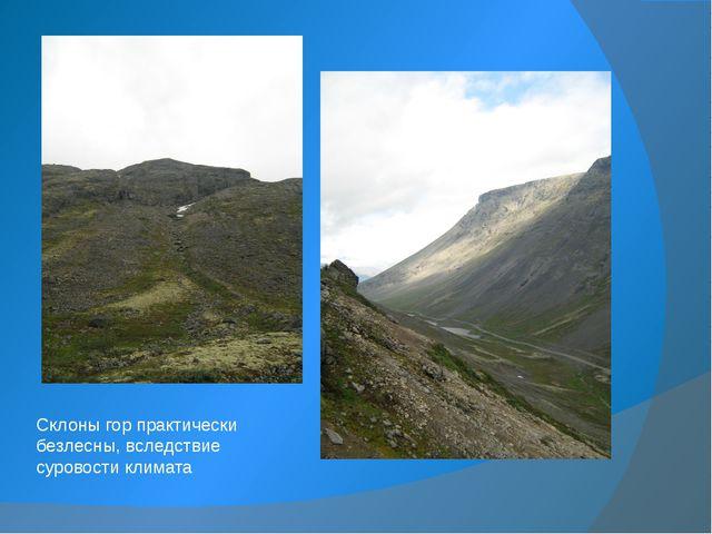 Склоны гор практически безлесны, вследствие суровости климата