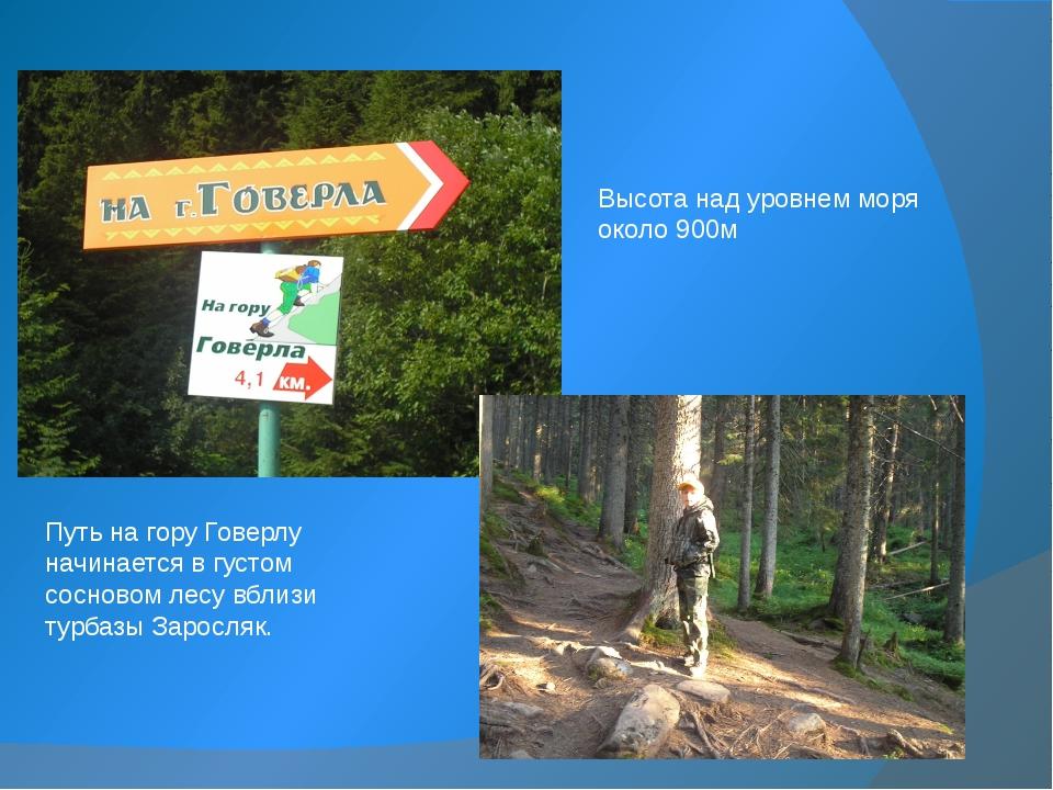 Путь на гору Говерлу начинается в густом сосновом лесу вблизи турбазы Заросля...