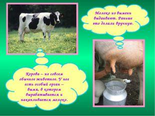 Корова – не совсем обычное животное. У нее есть особый орган – вымя, в которо