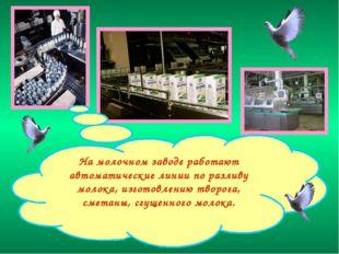 На молочном заводе работают автоматические линии по разливу молока, изготовле