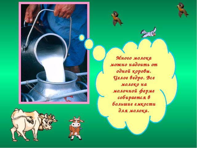 Много молока можно надоить от одной коровы. Целое ведро. Все молоко на молочн...