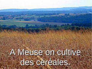 A Meuse on cultive des céréales.