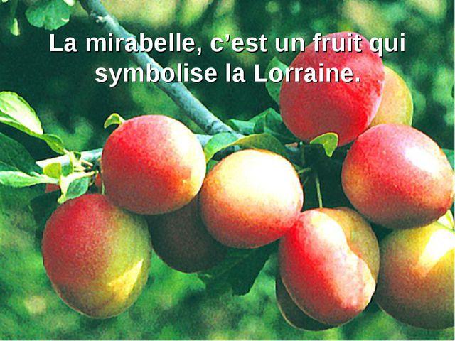 La mirabelle, c'est un fruit qui symbolise la Lorraine.