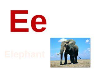 Ee Elephant