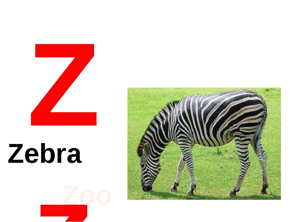 Zz Zebra Zoo