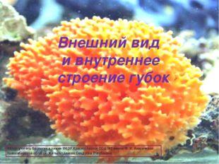 Внешний вид и внутреннее строение губок Автор: учитель биологии и химии МКОУ