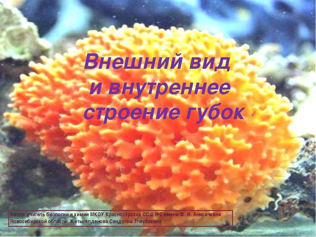 Внешний вид и внутреннее строение губок Автор: учитель биологии и химии МКОУ...