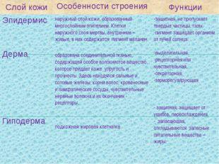 Слой кожи Особенности строения Функции Эпидермис Дерма Гиподерма наружный сло