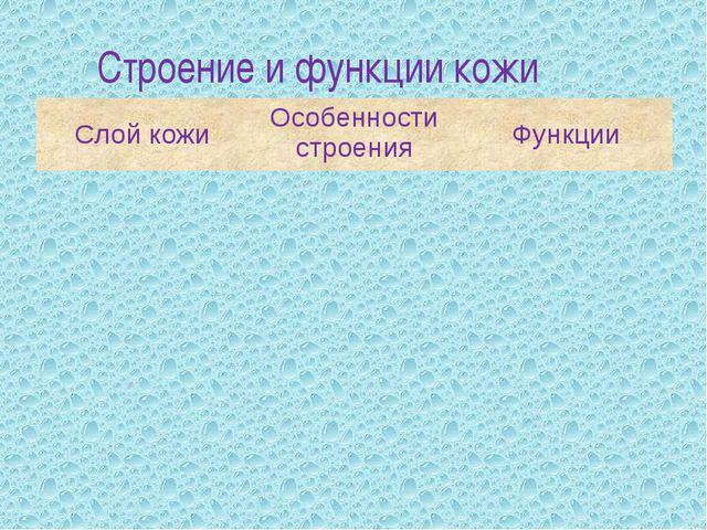 Строение и функции кожи Слой кожи Особенности строения Функции