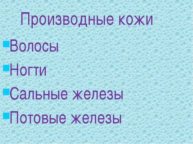 Производные кожи Волосы Ногти Сальные железы Потовые железы