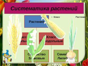 Систематика растений Класс однодольных состоит из 122 семейств и 63 000 видов