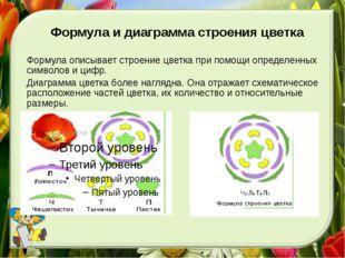 Формула и диаграмма строения цветка Формула описывает строение цветка при пом