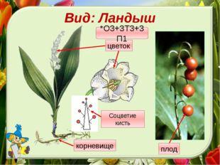 Вид: Ландыш *О3+3Т3+3П1 Соцветие кисть корневище цветок плод Давай внимательн