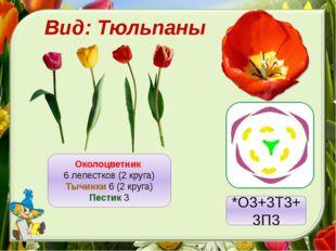 Вид: Тюльпаны Околоцветник 6 лепестков (2 круга) Тычинки 6 (2 круга) Пестик 3