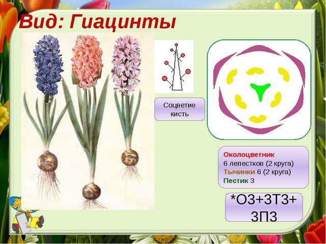 Вид: Гиацинты Околоцветник 6 лепестков (2 круга) Тычинки 6 (2 круга) Пестик 3...