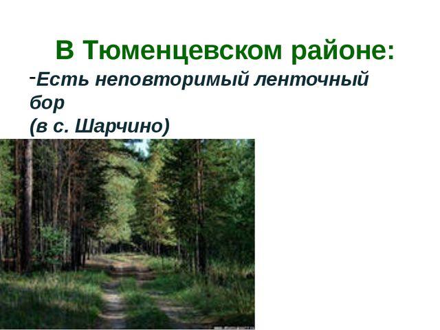 В Тюменцевском районе: Есть неповторимый ленточный бор (в с. Шарчино)