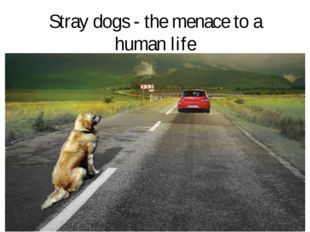 Stray dogs - the menace to a human life