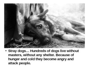 Stray dogs… Hundreds of dogs live without masters, without any shelter. Beca