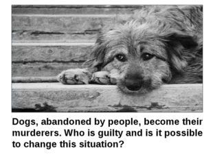 Dogs, abandoned by people, become their murderers. Who is guilty and is it p