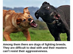 Among them there are dogs of fighting breeds. They are difficult to deal wit