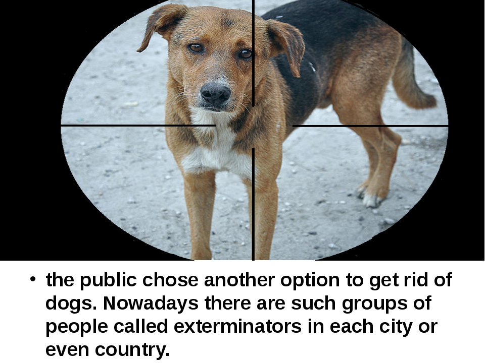 the public chose another option to get rid of dogs. Nowadays there are such...