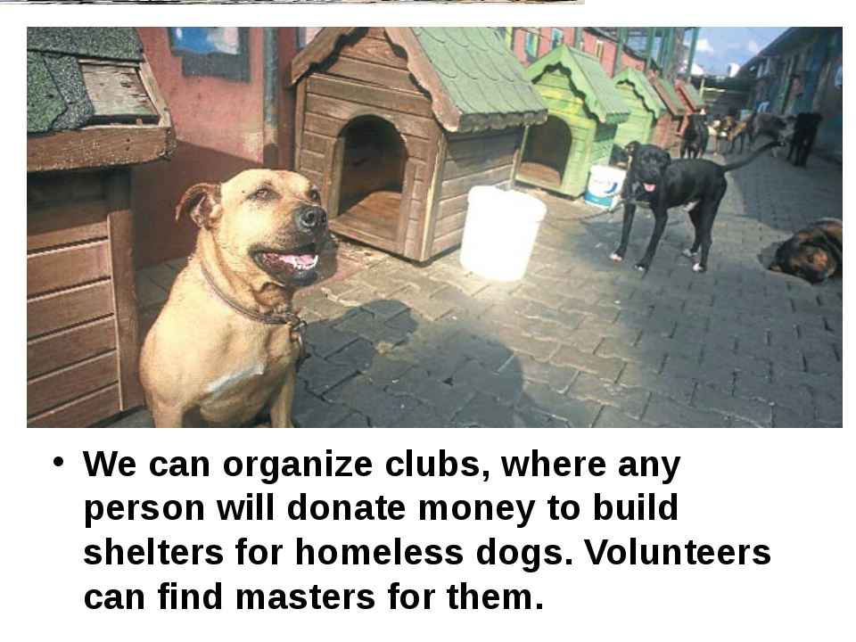 We can organize clubs, where any person will donate money to build shelters...