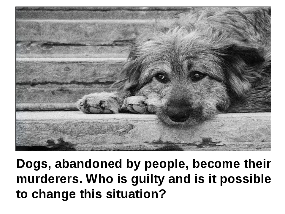 Dogs, abandoned by people, become their murderers. Who is guilty and is it p...